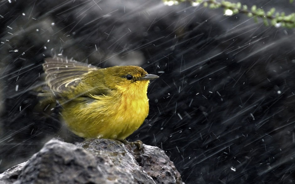 bird-in-rain-hd-wallpaper