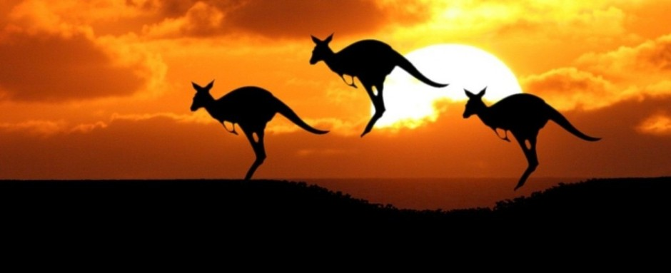 Kangaroo-at-Sunset-e1411339128952-1024x418