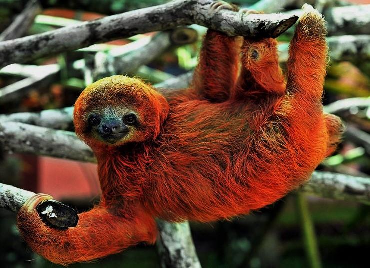Sloth_sanctuary_8_2928202k (3)